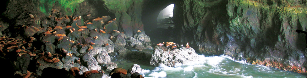 About Sea Lion Caves