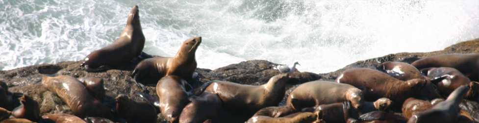 Sea Lion Caves Curriculum