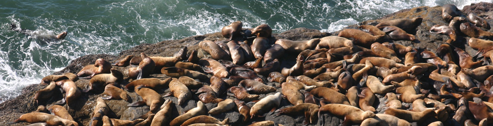 Sea Lion Caves Information